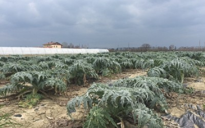 Panorama campo coltivato