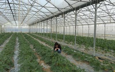 Controllo piante in serra