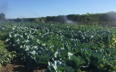 Irrigazione campi coltivati