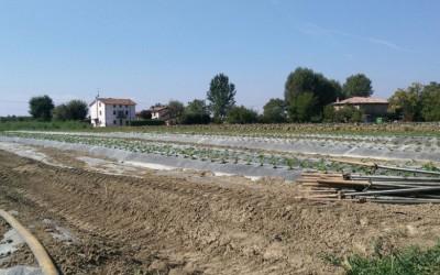 Campi azienda agricola