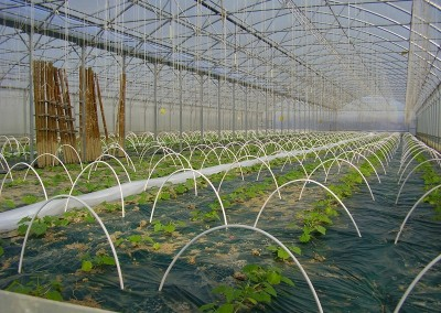 Piante coltivate in serra