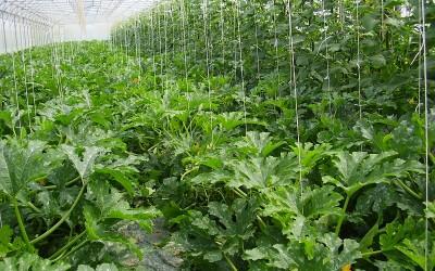 Coltivazione in serra