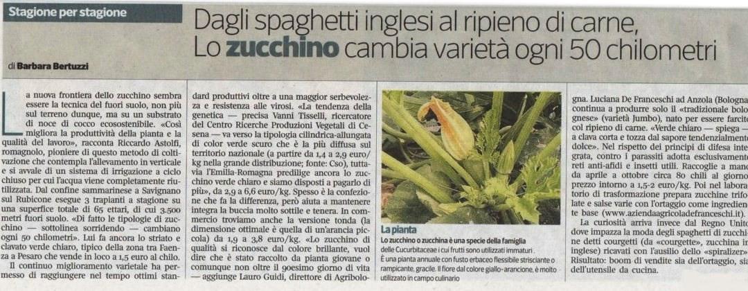 Zucchino tradizionale bolognese