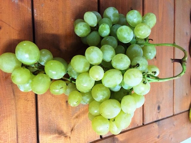 Grappolo d'uva bianca